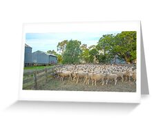 With The Sheep..... Greeting Card