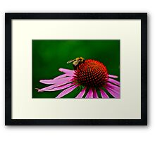 Busy Bumble Bee 2 Framed Print