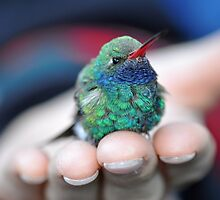 A Bird in the Hand  by Judy Grant