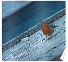 Robin about to fly off Poster