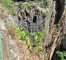 Looking over the Edge! Purling Brook Falls, Springbrook. Qld. by Rita Blom
