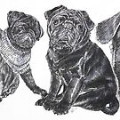 Growing Up Black Pug by BarbBarcikKeith