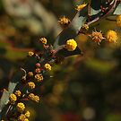 ANBG 22SEP2014 -2 by beeden