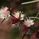 ANBG 22SEP2014 -5 by beeden