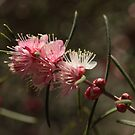 ANBG 22SEP2014 -6 by beeden