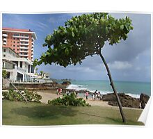 leaning Tree in Puerto Rico Poster