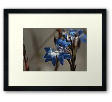 ANBG 22SEP2014 -11 Framed Print