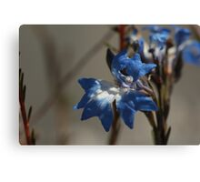 ANBG 22SEP2014 -11 Canvas Print