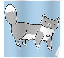 Fluffy Blue Tuxedo Cat Poster