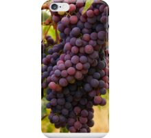 Old Vine Zinfandel Grapes iPhone Case/Skin