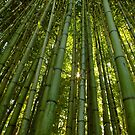Bamboo by Gabrielle  Lees