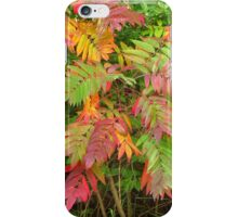 All The Colors of the Rainbow iPhone Case/Skin