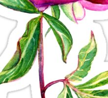 Delicate watercolor pink peony Sticker