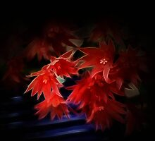 Christmas Cactus in March by missmoneypenny
