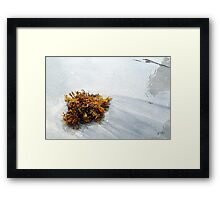 Seaweed And Sand Framed Print
