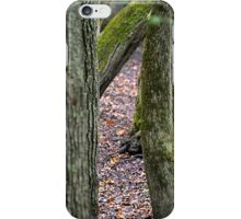 Walk Among The Trees iPhone Case/Skin