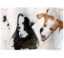Poppy and her puppies Poster