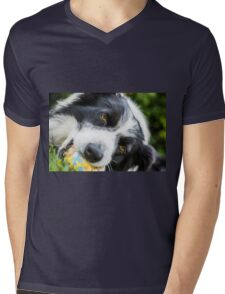 portrait of a border collie dog while playing with a ball Mens V-Neck T-Shirt