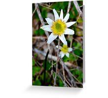 Mountain Flower Greeting Card