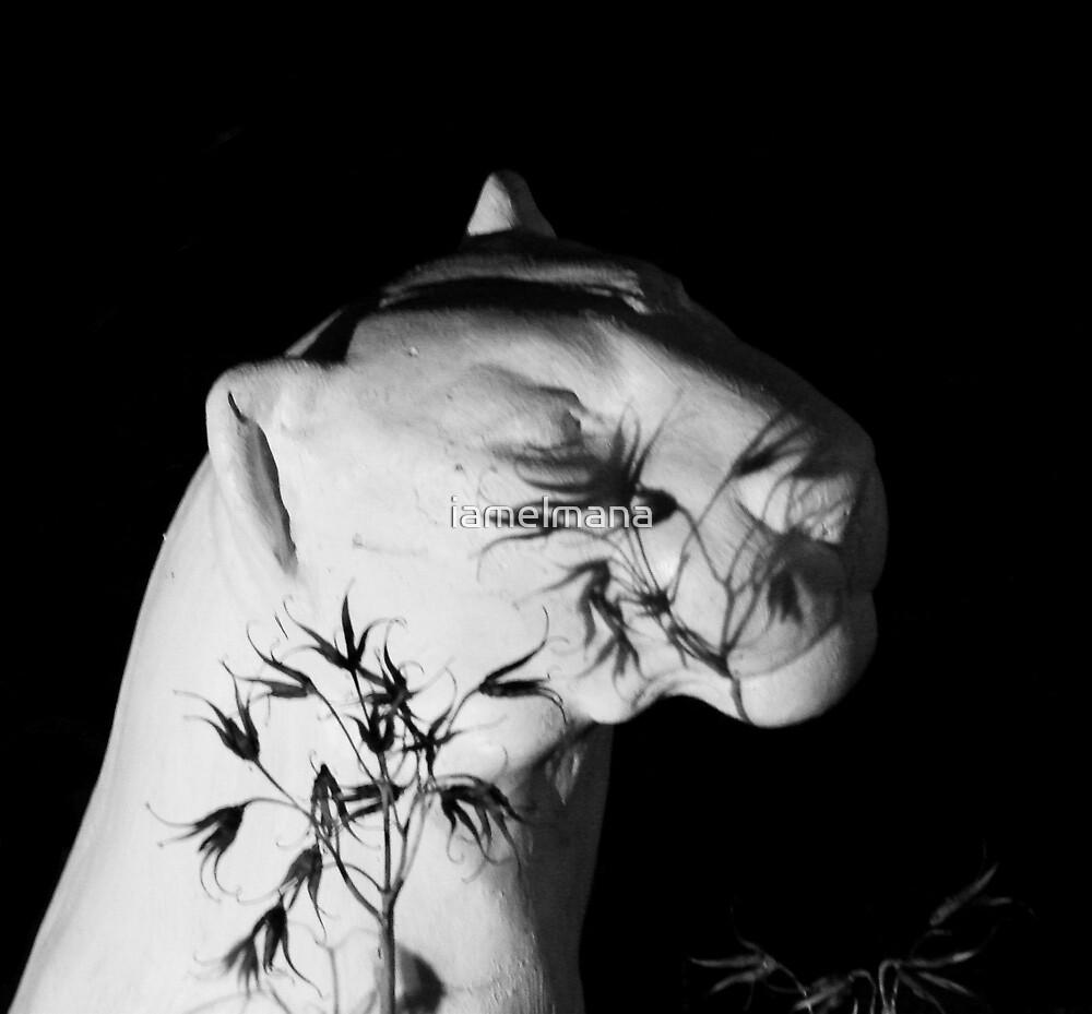 Still Life by iamelmana