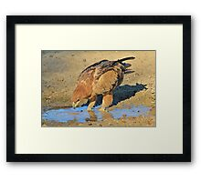 Tawny Eagle - Curious Life and Funny Nature Framed Print