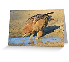 Tawny Eagle - Curious Life and Funny Nature Greeting Card