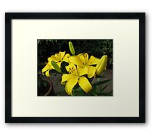Lemon Lilies in the Lamplight Framed Print