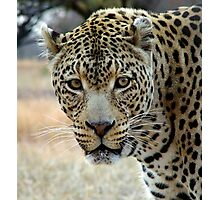 If looks could kill..... Photographic Print