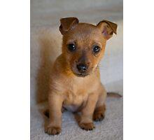 Meet Poppy! Photographic Print