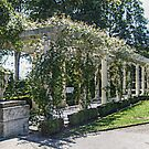 The Marble Pergola in the Gardens, Rosecliff Mansion by Jane Neill-Hancock