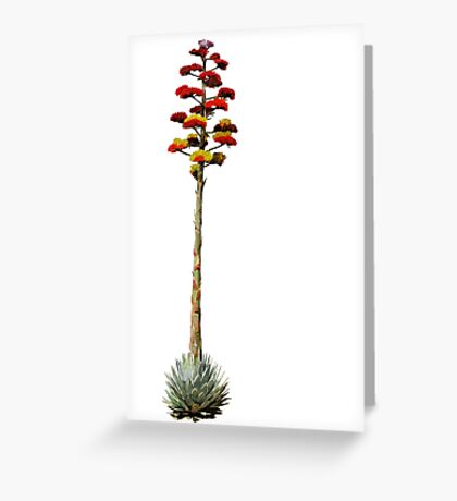 Agave in Bloom Greeting Card