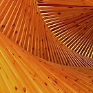 Timber Twirl by diggle