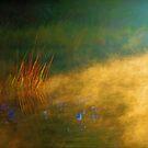 Misty Morning by Eileen McVey