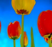 Dutch Tulips part 2 Sticker