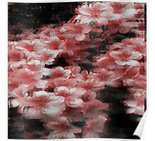 3-D style Pink Blossoms Poster