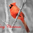 Red Cardinal Christmas by hummingbirds