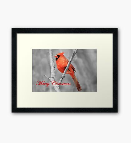 Red Cardinal Christmas Framed Print