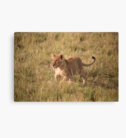LION CUB READY FOR SOME PLAYTIME Canvas Print