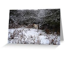 Miniature New Forest Pony in the snow Greeting Card