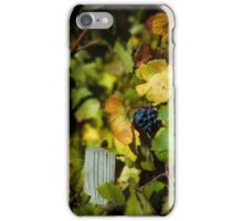 Wine grapes just before harvest iPhone Case/Skin