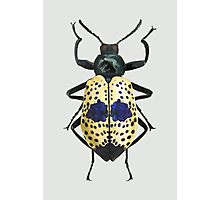 Spotted Beetle Photographic Print