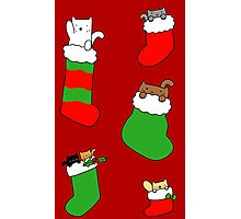 Christmas Stocking Kitties Photographic Print