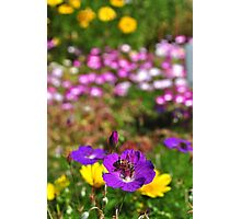 Bee buffet Photographic Print
