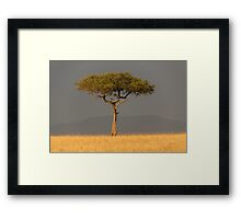 ACACIA TREE Framed Print