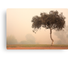 Foggy Morning, Bridgetown, Western Australia Canvas Print