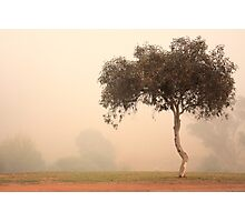 Foggy Morning, Bridgetown, Western Australia Photographic Print