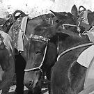 Santorini's stoic donkeys by geof