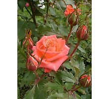 The time of roses Photographic Print