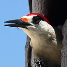 Woodpecker Lookout. by vette