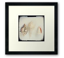 Shell trio Framed Print